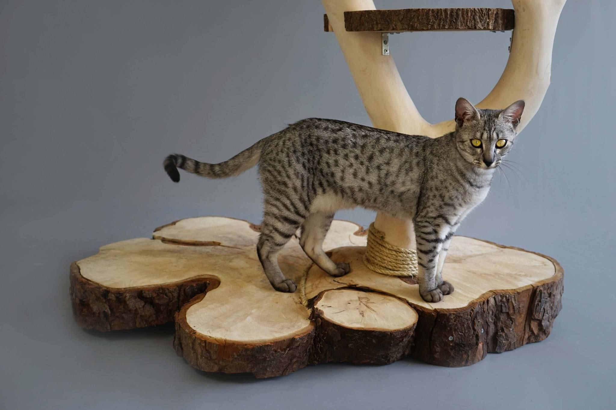 cat tree for large cats reviews by www.puppyurl.com