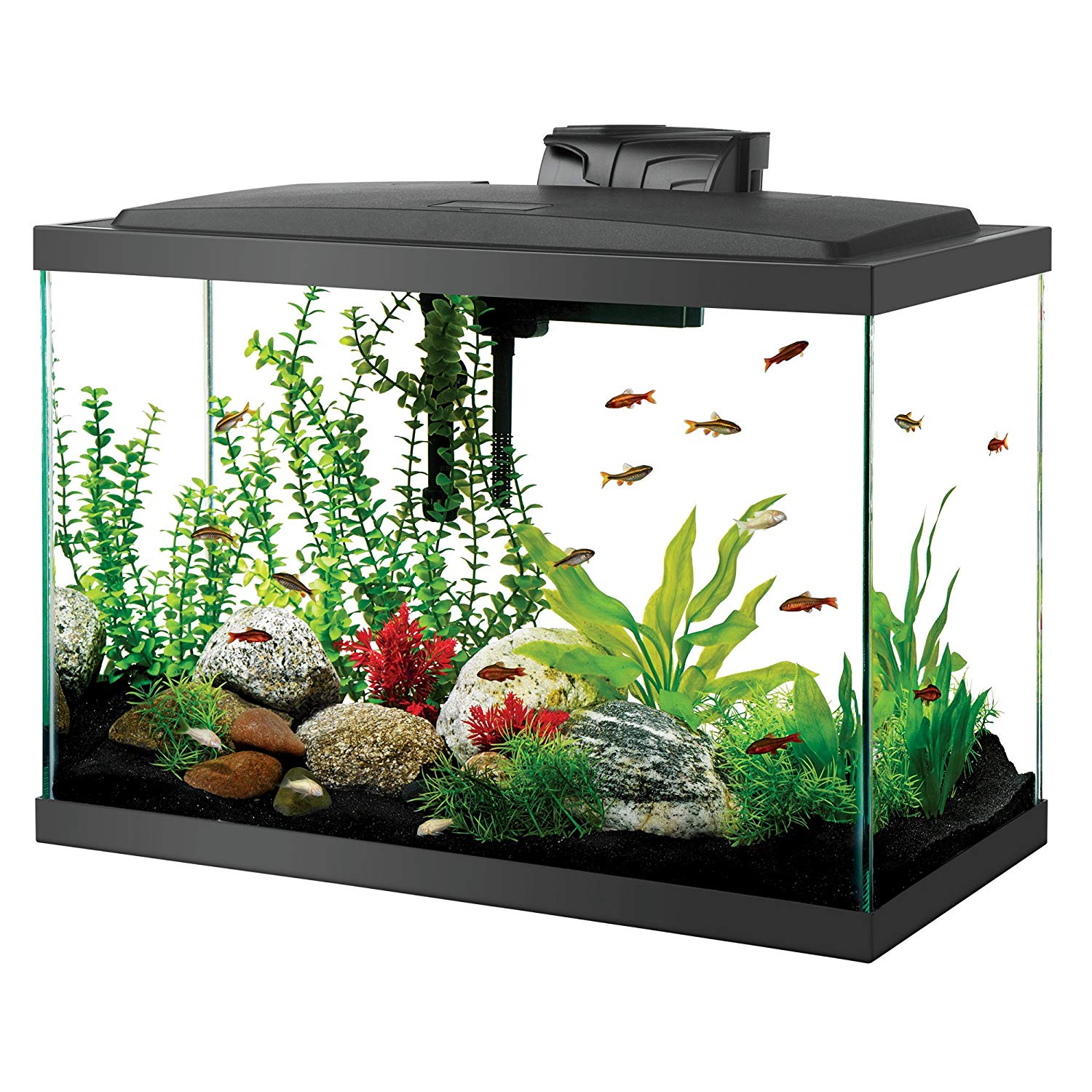 Aqueon Goldfish Aquarium Starter Kit with LED Lighting review by www.puppyurl.com