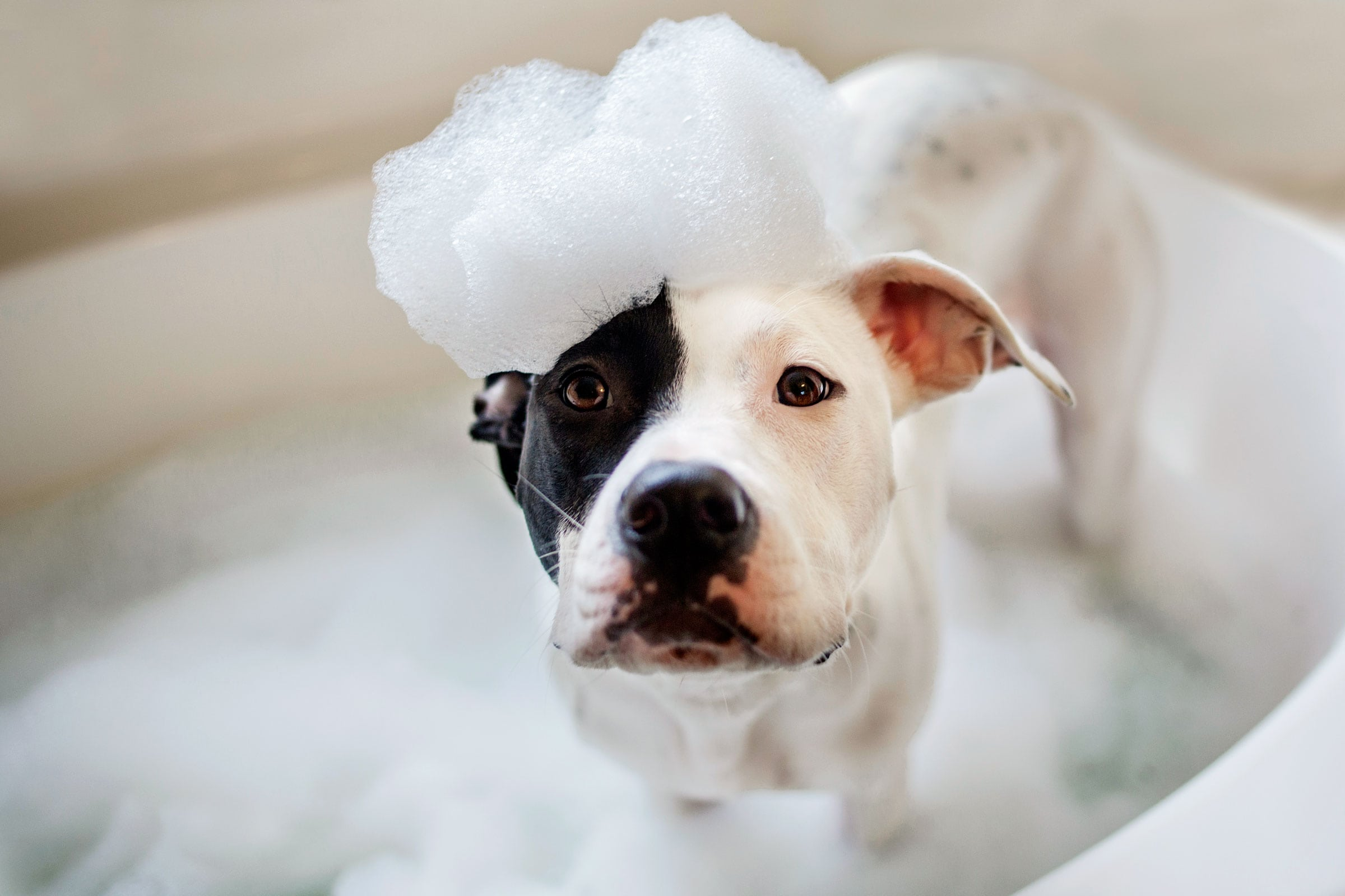 Best Dog Shampoo For Smell Review by www.puppyurl.com