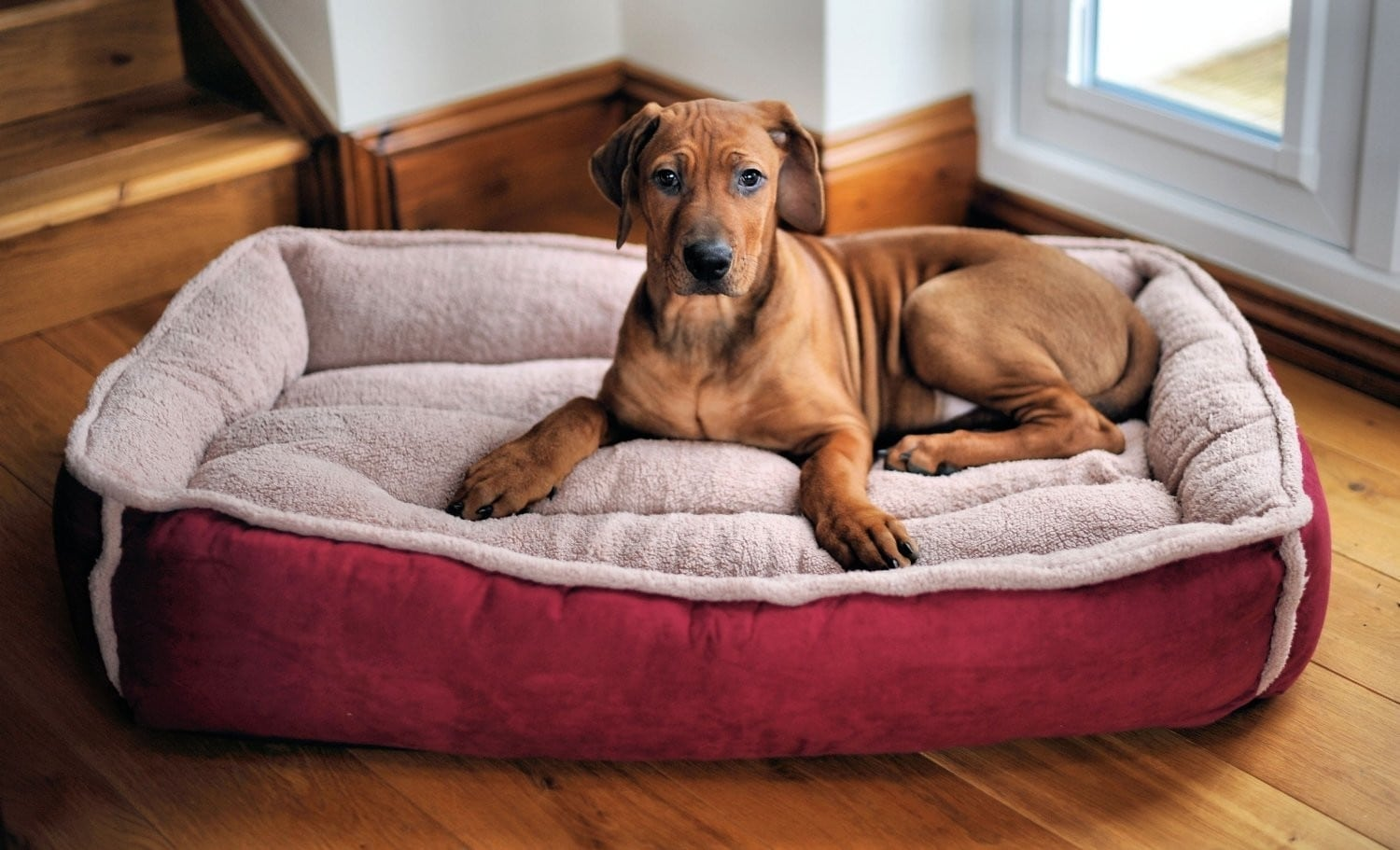 Best Orthopedic Dog Beds Review by www.puppyurl.com