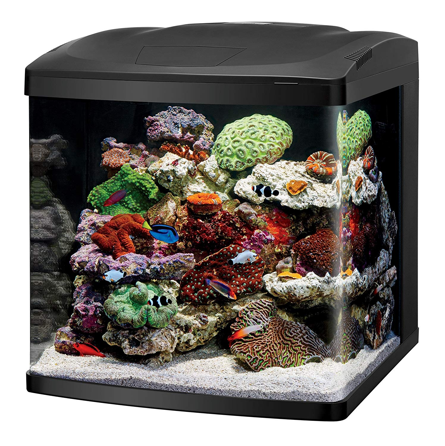 Coralife LED Biocube Aquarium review by www.puppyurl.com