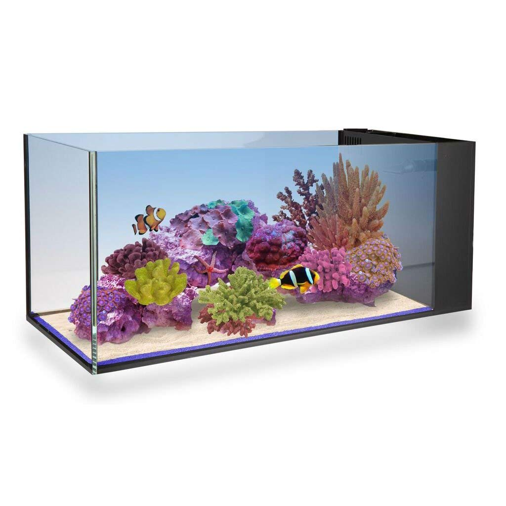Fusion Peninsula - Innovative Marine Fusion Peninsula 20 Gallon Glass NUVO Goldfish Aquarium review by www.puppyurl.com