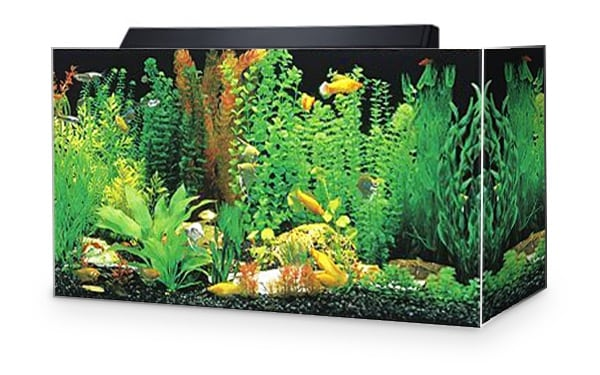 SeaClear Acrylic 29gal Goldfish Aquarium Combo Set review by www.puppyurl.com
